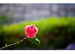 117023,地球,花,花,壁纸
