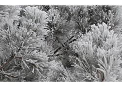 117219,地球,冬天的,黑色,白色,植物,树,壁纸图片