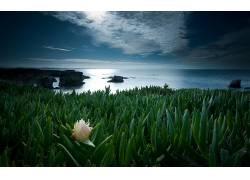 122807,地球,风景,海岸线,植物,花,岩石,海洋,海,地平线,壁纸