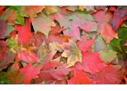 117226,地球,叶子,秋天,红色,模式,壁纸
