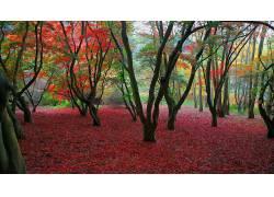 84020,地球,树,树,红色,叶子,壁纸图片
