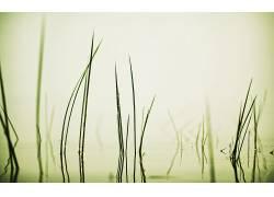 117365,地球,草,壁纸图片