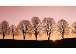 84025,地球,日落,树,壁纸图片