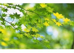 117444,地球,叶子,壁纸图片