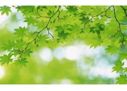 117446,地球,叶子,壁纸图片