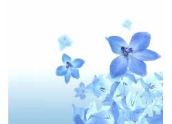 12437,地球,花,花,蓝色,花,壁纸