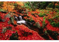 84128,地球,溪流,瀑布,水,叶子,秋天,自然,岩石,加拿大,苔藓,植物图片