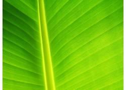12894,地球,关闭,起来,叶子,绿色的,特写镜头,植物,巨,壁纸