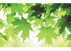 84129,地球,叶子,绿色的,树,天空,壁纸图片