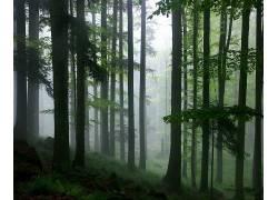 12895,地球,森林,绿色的,雾,壁纸图片