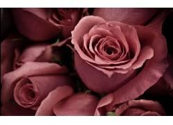 117583,地球,玫瑰,花,花,壁纸