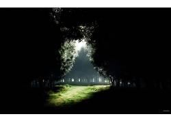84517,地球,森林,黑暗,草地,壁纸