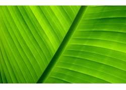 13884,地球,关闭,起来,叶子,特写镜头,绿色的,植物,巨,壁纸图片