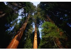 75262,地球,森林,壁纸图片
