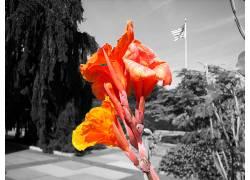 13999,地球,花,花,头盖骨,选择的,颜色,壁纸