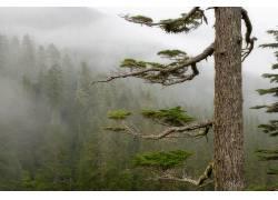 14564,地球,雾,森林,树,壁纸图片