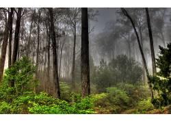 117639,地球,森林,壁纸图片