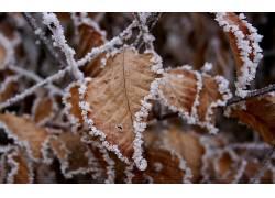 14917,地球,冬天的,叶子,壁纸