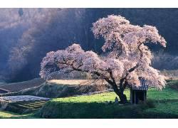 84621,地球,树,树,花,壁纸图片