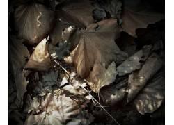 54375,地球,叶子,壁纸图片