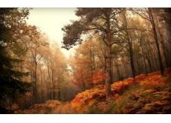 117673,地球,森林,壁纸图片