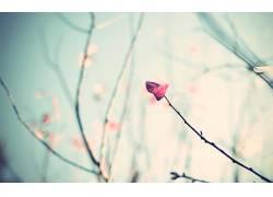 84638,地球,叶子,摄影,树,芽,壁纸图片