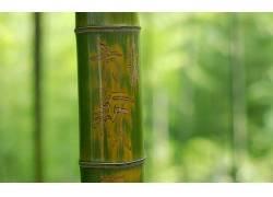 117694,地球,竹子,壁纸图片