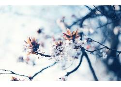 84641,地球,花,花,树,芽,壁纸图片