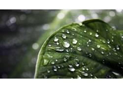 84654,地球,水,滴,叶子,水,壁纸