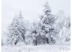 55199,地球,冬天的,树,雪,壁纸