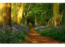 117706,地球,森林,小路,壁纸图片