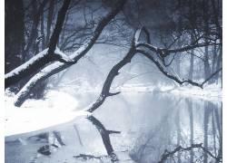 55202,地球,冬天的,树,河,壁纸