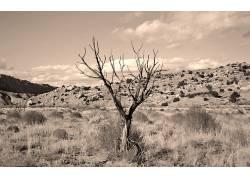 55215,地球,沙漠,树,壁纸