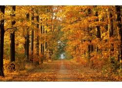 16086,地球,秋天,叶子,树,小路,壁纸图片