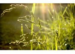 84749,地球,草,植物,壁纸图片