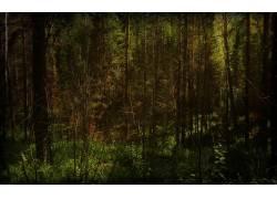 117920,地球,森林,壁纸图片
