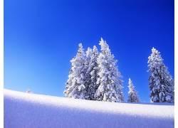 76793,地球,冬天的,雪,树,冰,寒冷,壁纸图片