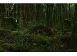 117924,地球,森林,壁纸图片