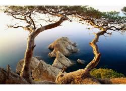 84819,地球,树,树,水,岩石,壁纸图片