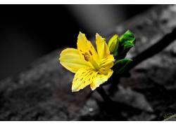117951,地球,花,花,黄色,壁纸图片