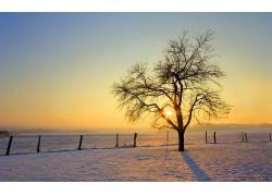 85264,地球,冬天的,树,太阳,壁纸图片