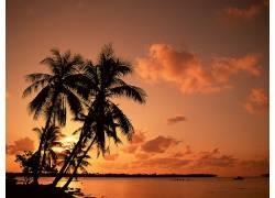76841,地球,海洋,日落,水,手掌,树,树,云,壁纸图片