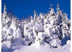 19793,地球,冬天的,树,雪,壁纸