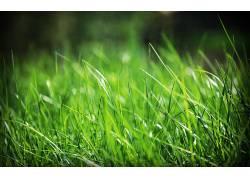 117960,地球,草,壁纸图片