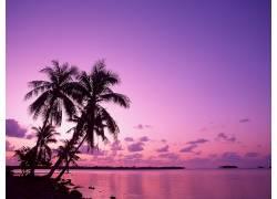 76844,地球,海洋,日落,水,海,手掌,树,树,壁纸图片