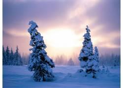 20335,地球,冬天的,雪,树,壁纸