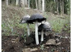 20789,地球,蘑菇,壁纸图片