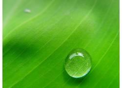 76852,地球,水,滴,叶子,绿色的,水,壁纸