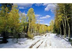 85279,地球,冬天的,雪,树,壁纸