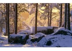 85281,地球,冬天的,雪,树,壁纸
